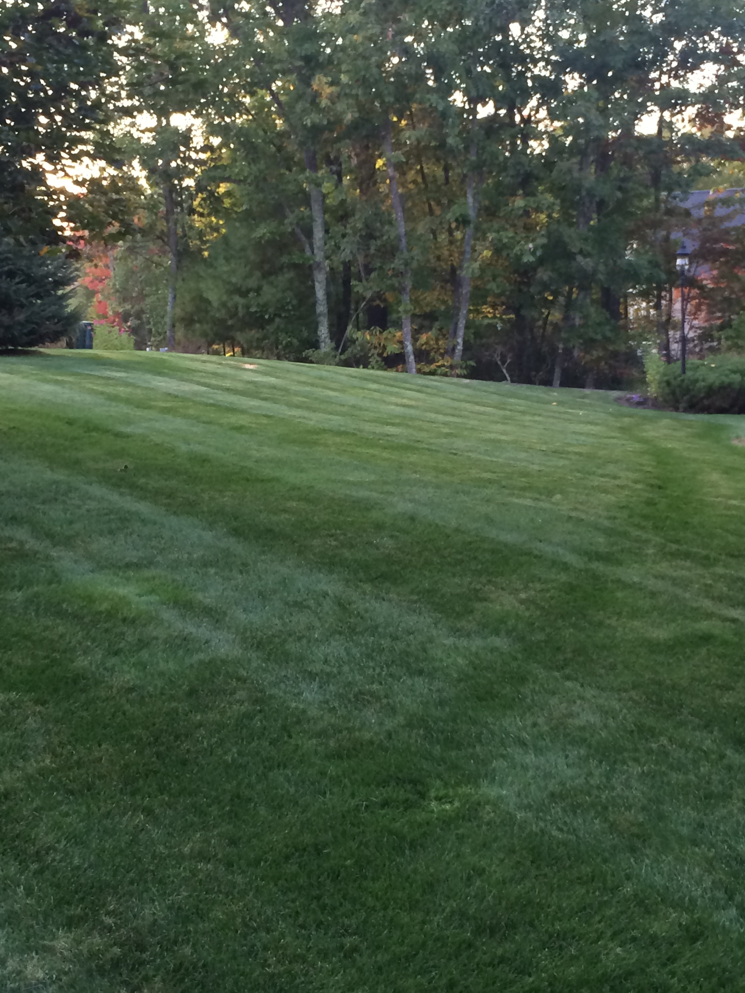 Lawn mowing service for homes businesses in nh firman for Lawn care services